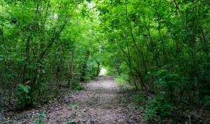 Traseul accidentat prin pădure