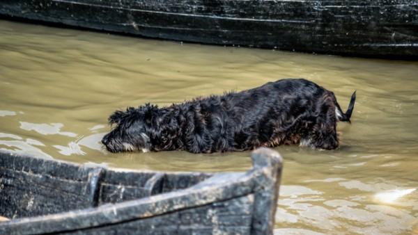 La o bălăceală canină